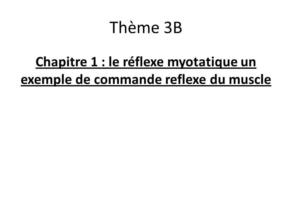 Thème 3B Chapitre 1 : le réflexe myotatique un exemple de commande reflexe du muscle