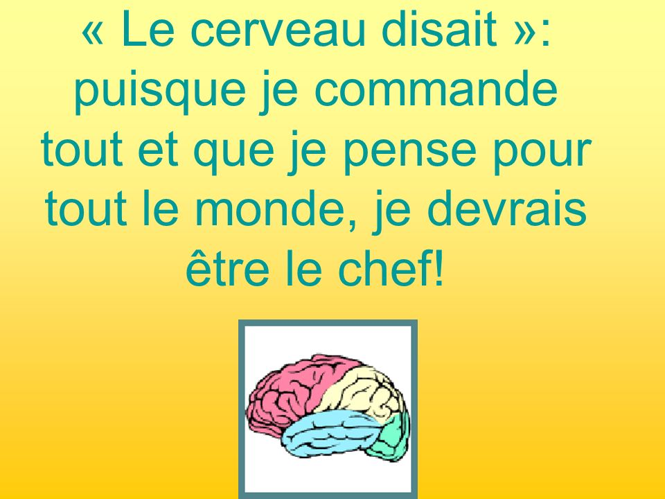 « Le cerveau disait »: puisque je commande tout et que je pense pour tout le monde, je devrais être le chef!