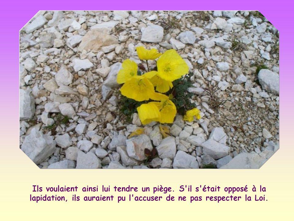 Il souligne ainsi la phrase bien connue : « Ne vous posez pas en juge, afin de n être pas jugés ; car c est de la façon dont vous jugez qu on vous jugera » (Mt 7,1-2).