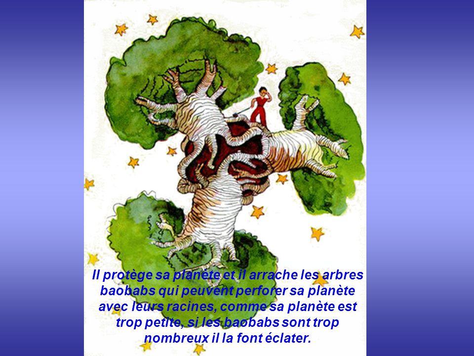 .. Il protège sa planète et il arrache les arbres baobabs qui peuvent perforer sa planète avec leurs racines, comme sa planète est trop petite, si les