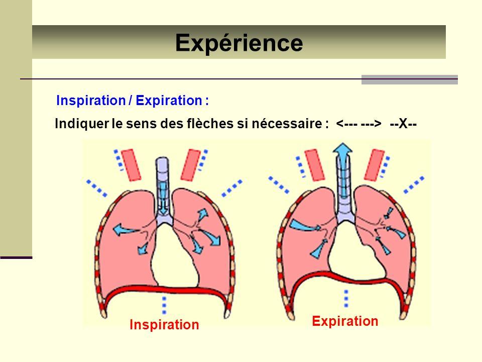 Expérience Inspiration / Expiration : Inspiration Expiration Indiquer le sens des flèches si nécessaire : --X--