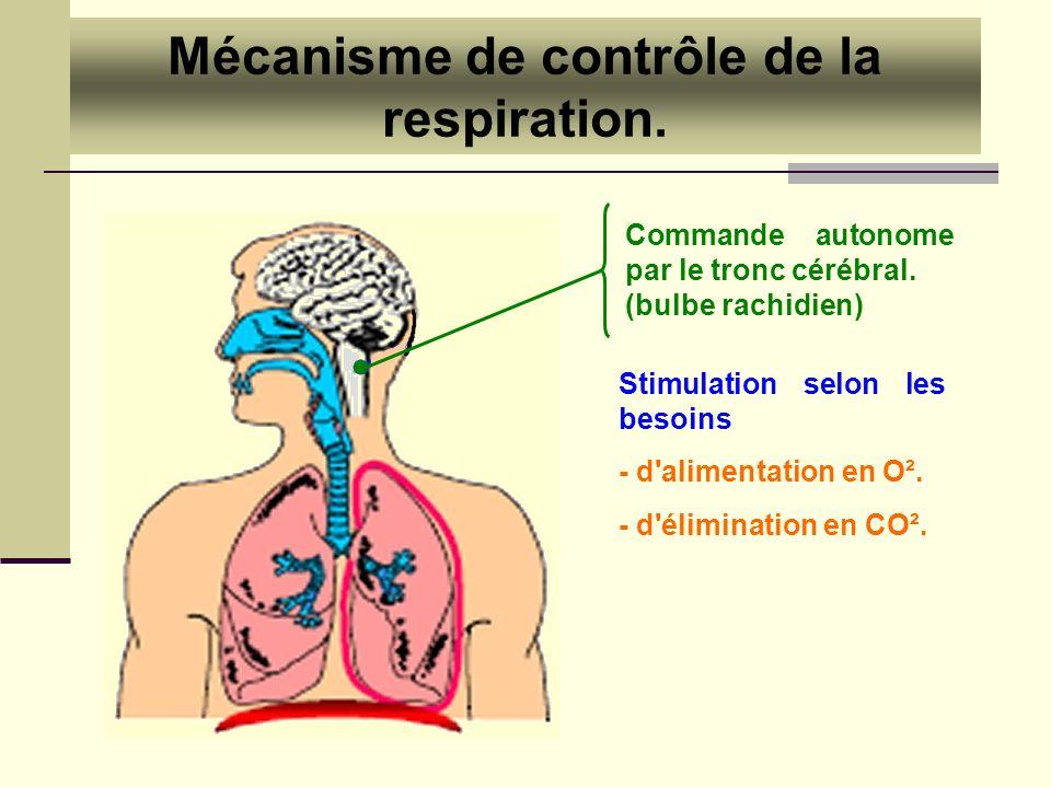 Mécanisme de contrôle de la respiration. Commande autonome par le tronc cérébral. (bulbe rachidien) Stimulation selon les besoins - d'alimentation en