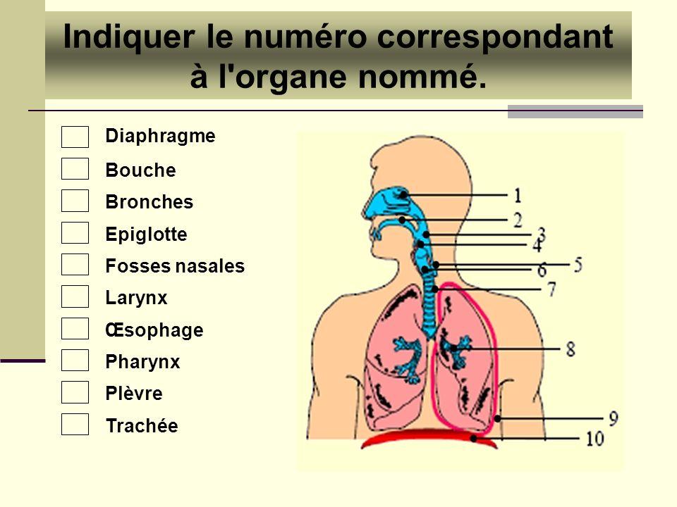 Diaphragme Bouche Bronches Epiglotte Fosses nasales Larynx Œsophage Pharynx Plèvre Trachée Indiquer le numéro correspondant à l'organe nommé.