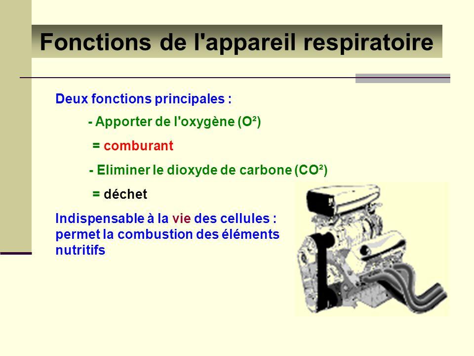 Fonctions de l'appareil respiratoire Deux fonctions principales : - Apporter de l'oxygène (O²) = comburant - Eliminer le dioxyde de carbone (CO²) = dé