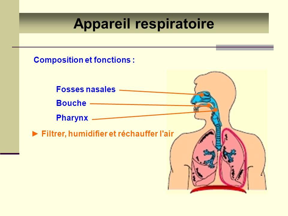 Appareil respiratoire Composition et fonctions : Fosses nasales Bouche Pharynx Filtrer, humidifier et réchauffer l'air