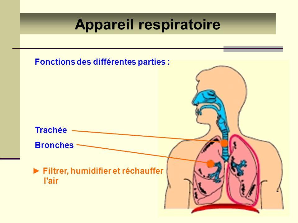 Appareil respiratoire Filtrer, humidifier et réchauffer l'air Trachée Bronches Fonctions des différentes parties :