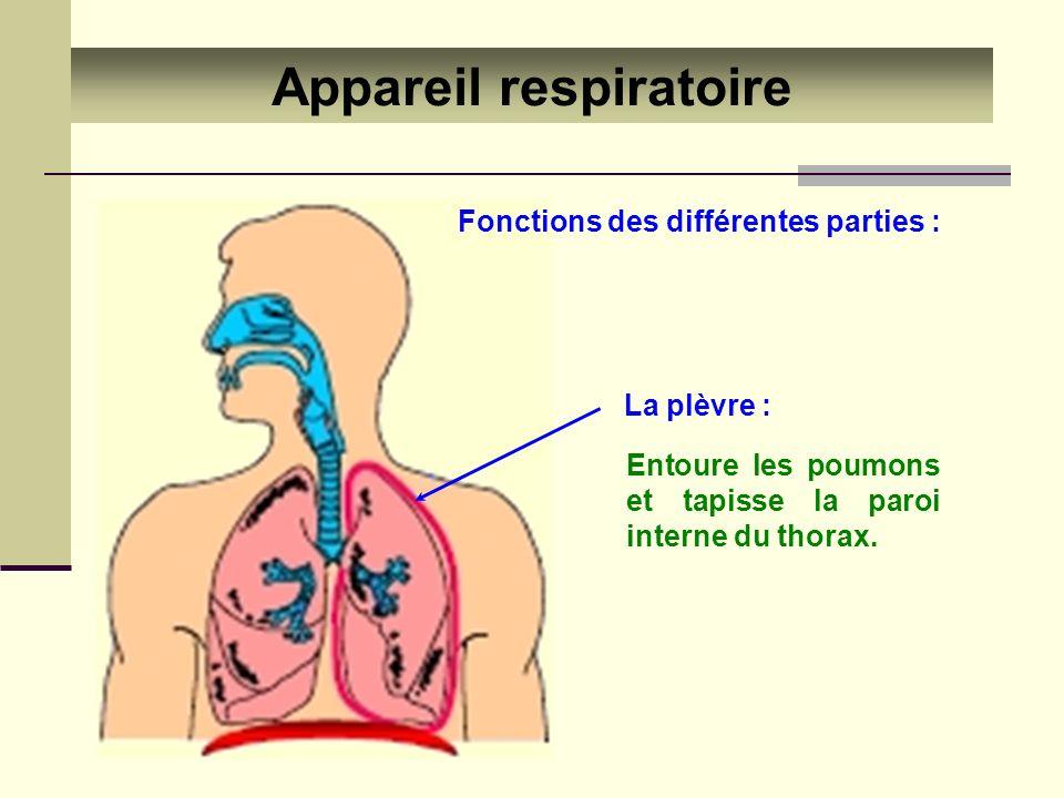 La plèvre : Entoure les poumons et tapisse la paroi interne du thorax. Appareil respiratoire Fonctions des différentes parties :