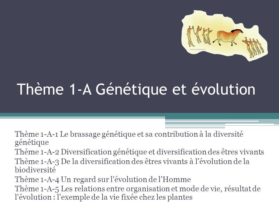 Thème 1-A Génétique et évolution Thème 1-A-1 Le brassage génétique et sa contribution à la diversité génétique Thème 1-A-2 Diversification génétique et diversification des êtres vivants Thème 1-A-3 De la diversification des êtres vivants à l évolution de la biodiversité Thème 1-A-4 Un regard sur l évolution de l Homme Thème 1-A-5 Les relations entre organisation et mode de vie, résultat de l évolution : l exemple de la vie fixée chez les plantes
