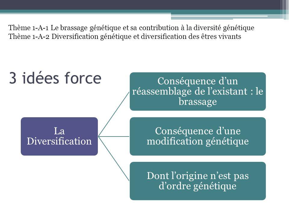 3 idées force La Diversification Conséquence dun réassemblage de lexistant : le brassage Conséquence dune modification génétique Dont lorigine nest pa