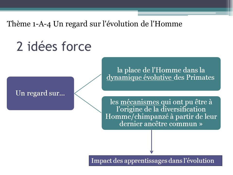 2 idées force Un regard sur… la place de lHomme dans la dynamique évolutive des Primates les mécanismes qui ont pu être à lorigine de la diversification Homme/chimpanzé à partir de leur dernier ancêtre commun » Thème 1-A-4 Un regard sur l évolution de l Homme Impact des apprentissages dans lévolution