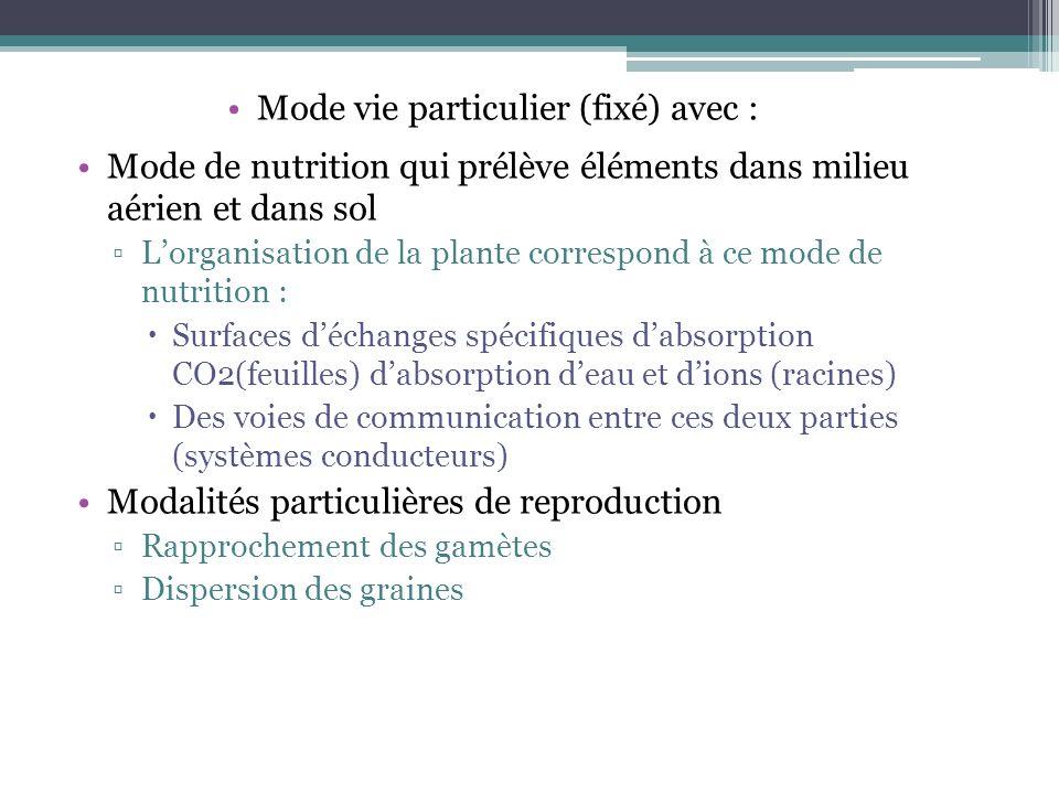 Mode de nutrition qui prélève éléments dans milieu aérien et dans sol Lorganisation de la plante correspond à ce mode de nutrition : Surfaces déchange