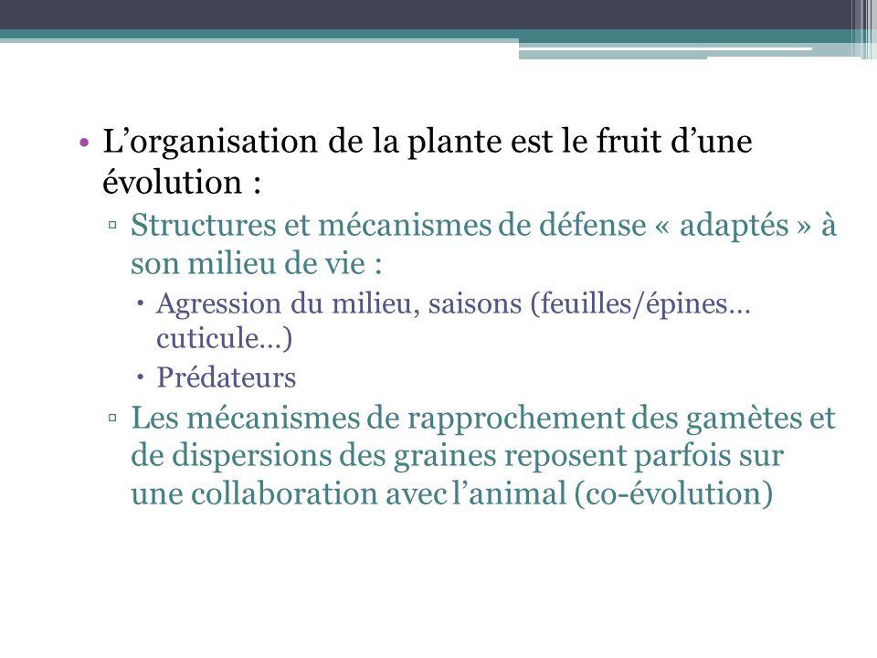 Lorganisation de la plante est le fruit dune évolution : Structures et mécanismes de défense « adaptés » à son milieu de vie : Agression du milieu, sa