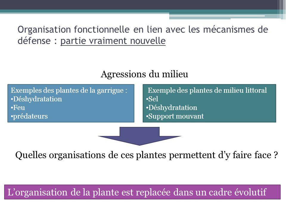 Organisation fonctionnelle en lien avec les mécanismes de défense : partie vraiment nouvelle Exemple des plantes de milieu littoral Sel Déshydratation