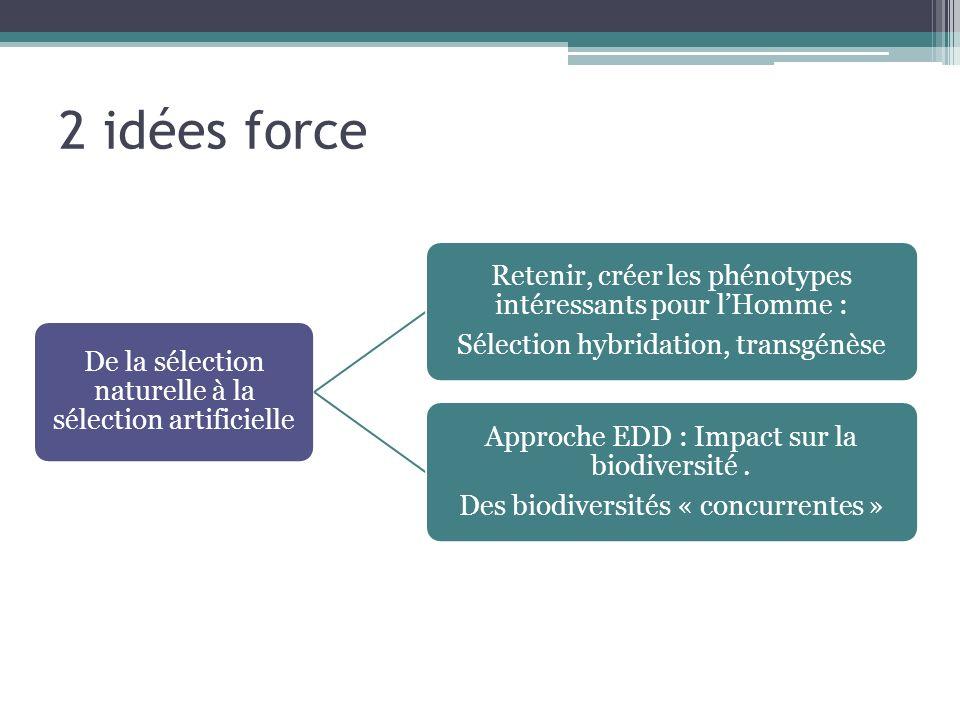 2 idées force De la sélection naturelle à la sélection artificielle Retenir, créer les phénotypes intéressants pour lHomme : Sélection hybridation, tr