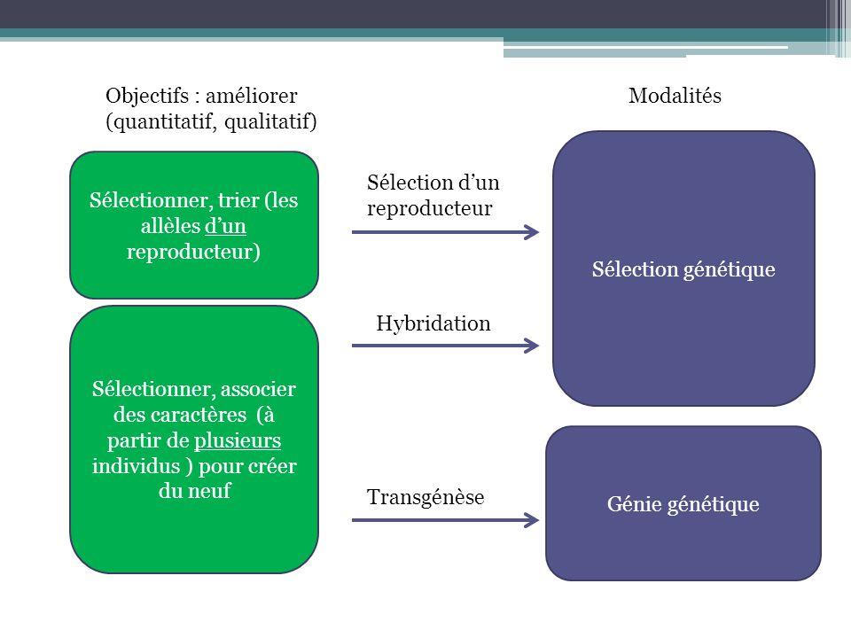 Sélection génétique Génie génétique Sélection dun reproducteur Hybridation Transgénèse Sélectionner, trier (les allèles dun reproducteur) Sélectionner, associer des caractères (à partir de plusieurs individus ) pour créer du neuf ModalitésObjectifs : améliorer (quantitatif, qualitatif)