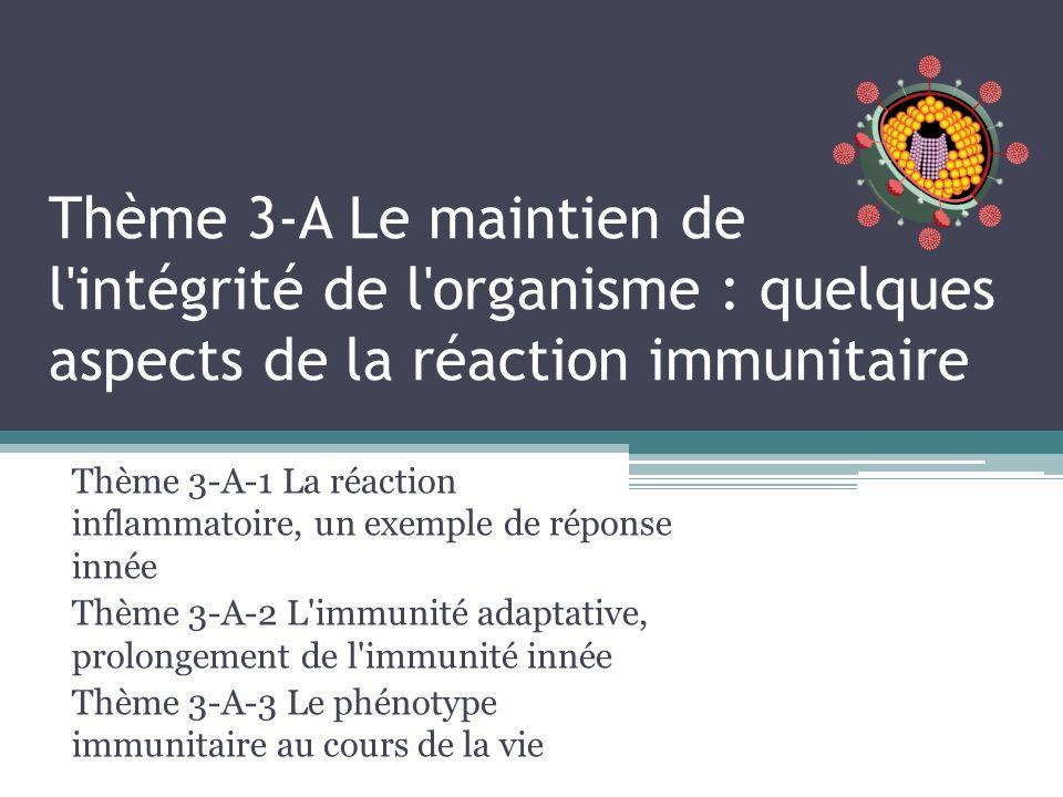 Thème 3-A Le maintien de l intégrité de l organisme : quelques aspects de la réaction immunitaire Thème 3-A-1 La réaction inflammatoire, un exemple de réponse innée Thème 3-A-2 L immunité adaptative, prolongement de l immunité innée Thème 3-A-3 Le phénotype immunitaire au cours de la vie