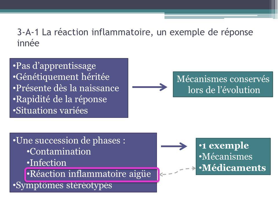 3-A-1 La réaction inflammatoire, un exemple de réponse innée 1 exemple Mécanismes Médicaments Pas dapprentissage Génétiquement héritée Présente dès la naissance Rapidité de la réponse Situations variées Mécanismes conservés lors de lévolution Une succession de phases : Contamination Infection Réaction inflammatoire aigüe Symptômes stéréotypés