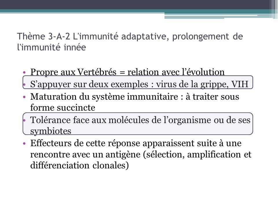 Propre aux Vertébrés = relation avec lévolution Sappuyer sur deux exemples : virus de la grippe, VIH Maturation du système immunitaire : à traiter sous forme succincte Tolérance face aux molécules de lorganisme ou de ses symbiotes Effecteurs de cette réponse apparaissent suite à une rencontre avec un antigène (sélection, amplification et différenciation clonales) Thème 3-A-2 L immunité adaptative, prolongement de l immunité innée