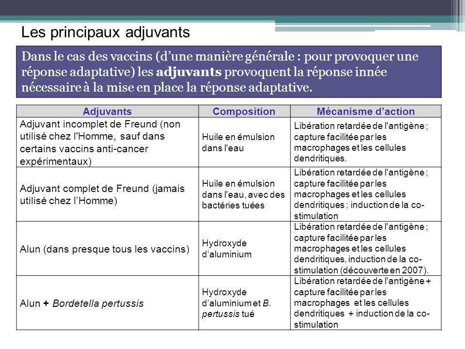 Les principaux adjuvants AdjuvantsCompositionMécanisme daction Adjuvant incomplet de Freund (non utilisé chez l'Homme, sauf dans certains vaccins anti