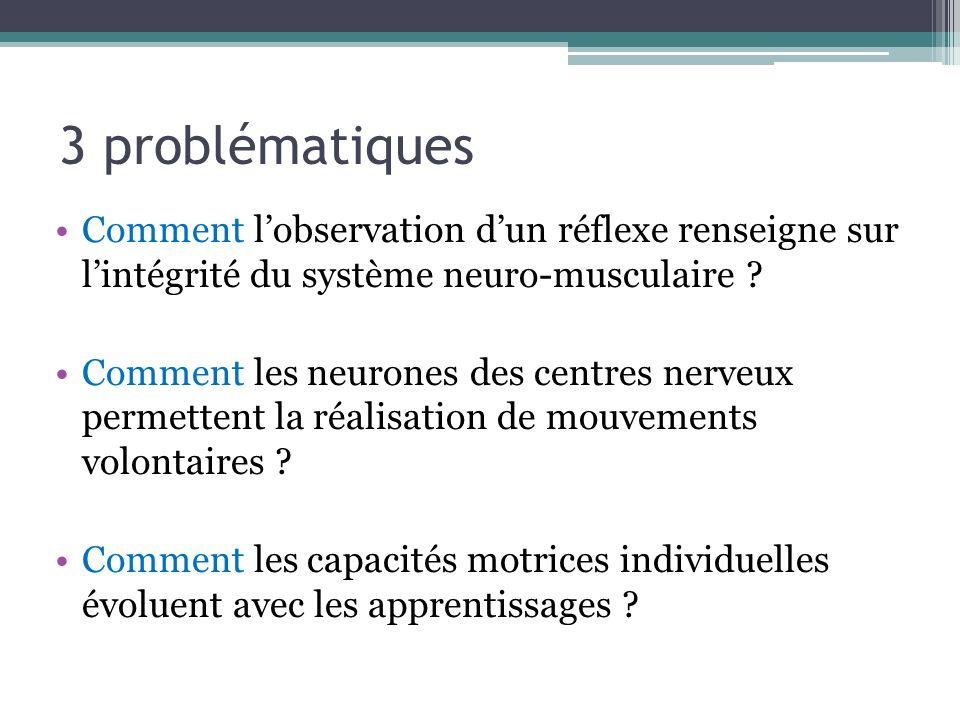 3 problématiques Comment lobservation dun réflexe renseigne sur lintégrité du système neuro-musculaire ? Comment les neurones des centres nerveux perm