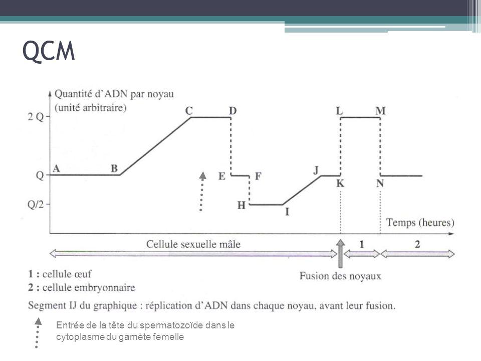 QCM Entrée de la tête du spermatozoïde dans le cytoplasme du gamète femelle