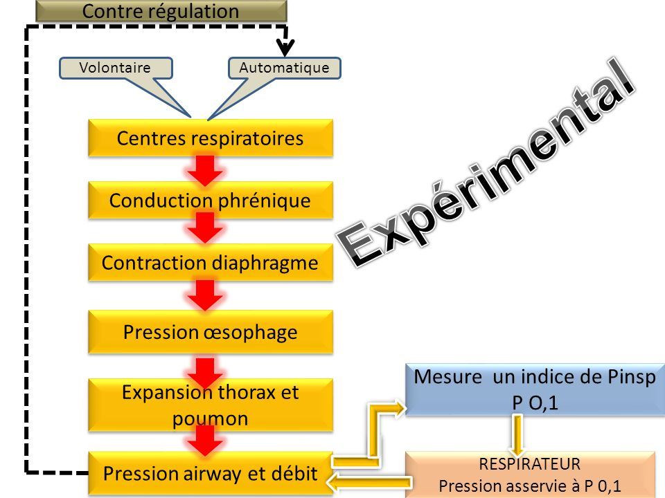 Centres respiratoires AutomatiqueVolontaire Conduction phrénique Contraction diaphragme Expansion thorax et poumon Pression œsophage Mesure un indice