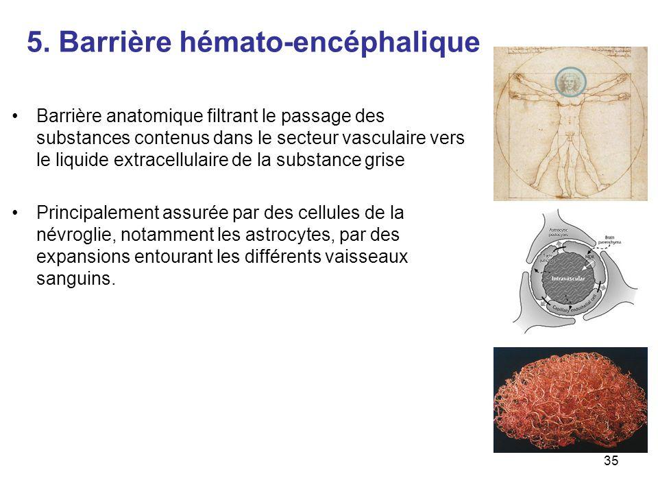 5. Barrière hémato-encéphalique Barrière anatomique filtrant le passage des substances contenus dans le secteur vasculaire vers le liquide extracellul
