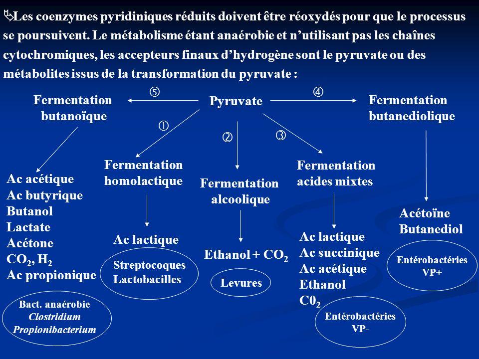 Les coenzymes pyridiniques réduits doivent être réoxydés pour que le processus se poursuivent. Le métabolisme étant anaérobie et nutilisant pas les ch