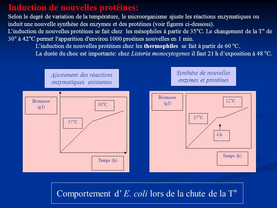 Biomasse (g/l) Temps (h) 37°C 12°C 4 h Comportement d E. coli lors de la chute de la T° Ajustement des réactions enzymatiques existantes Synthèse de n