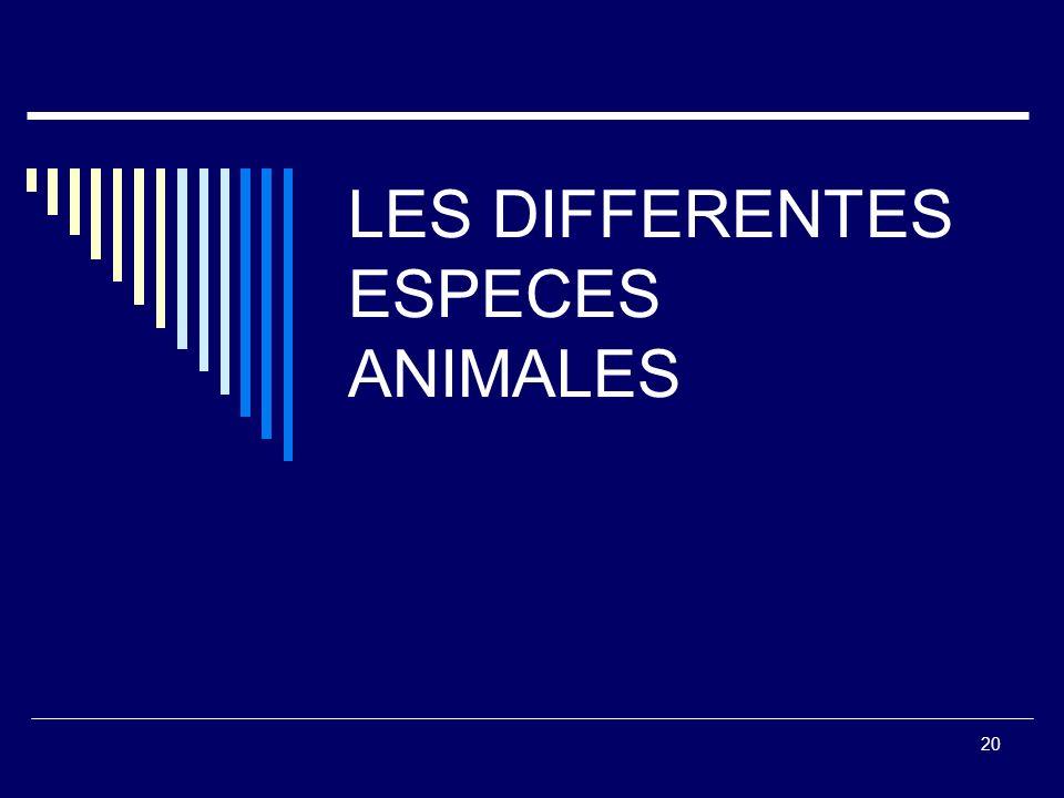 FORDIS Alimentaire Orientation Produits Carnés FORDIS Alimentaire CEFIMEV 19 LES DIFFERENTES FORMES DE VENTE Le Rayon Boucherie LIBRE-SERVICE