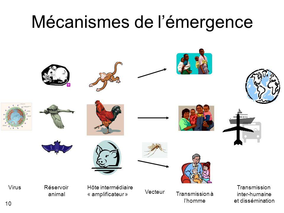 10 Mécanismes de lémergence Transmission à lhomme Transmission inter-humaine et dissémination Virus Hôte intermédiaire « amplificateur » Vecteur