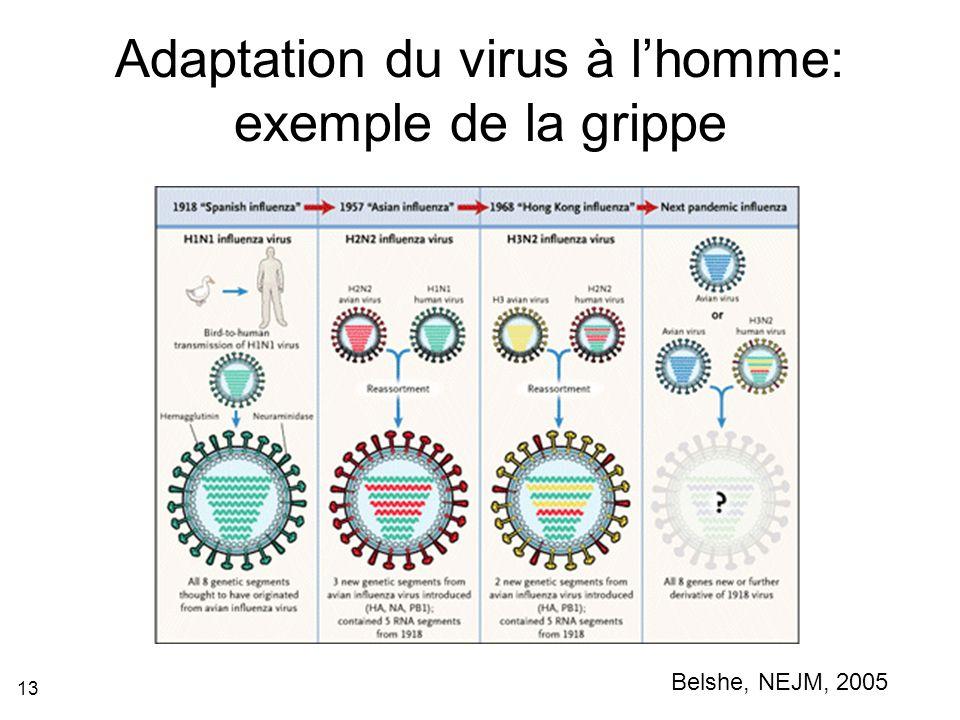 13 Adaptation du virus à lhomme: exemple de la grippe Belshe, NEJM, 2005
