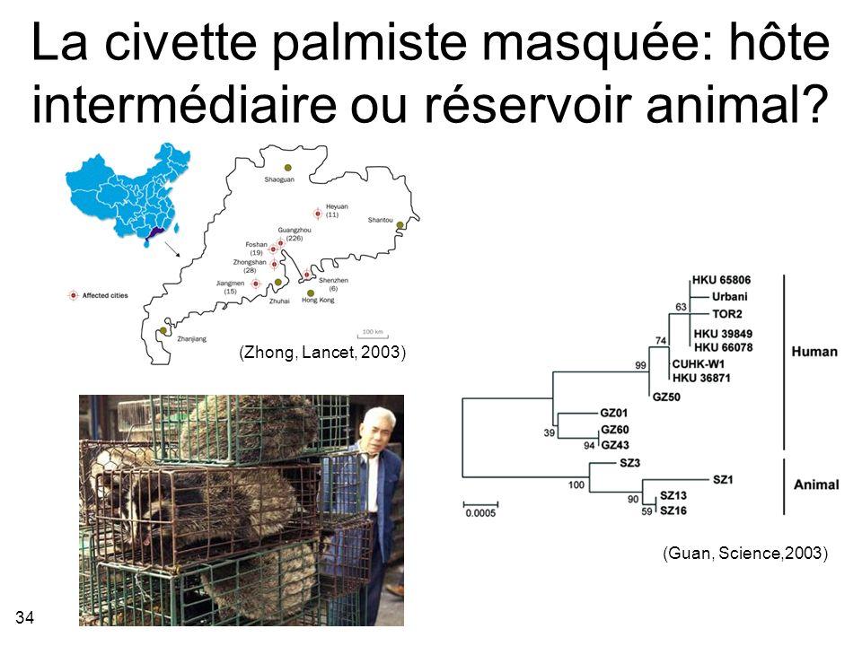 34 La civette palmiste masquée: hôte intermédiaire ou réservoir animal.