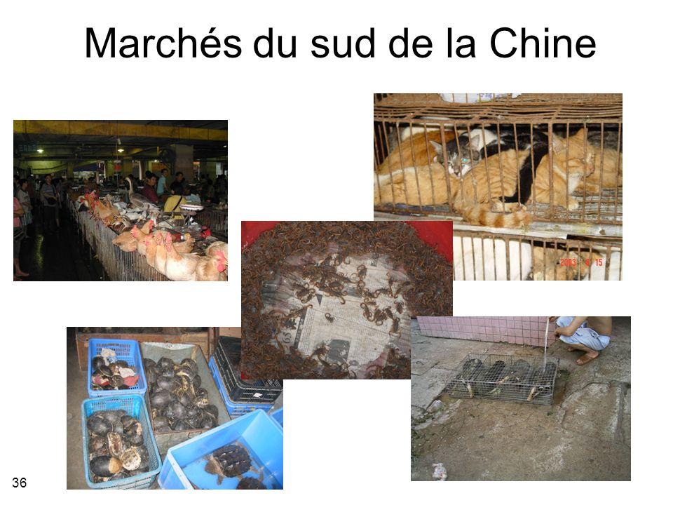 36 Marchés du sud de la Chine