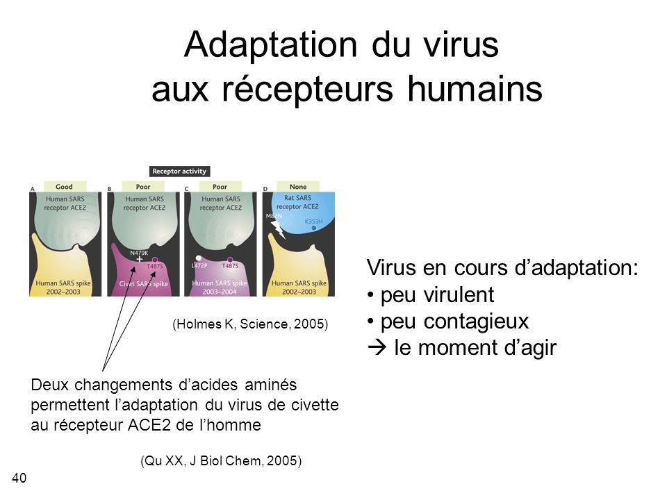 40 (Holmes K, Science, 2005) Adaptation du virus aux récepteurs humains (Qu XX, J Biol Chem, 2005) Deux changements dacides aminés permettent ladaptation du virus de civette au récepteur ACE2 de lhomme Virus en cours dadaptation: peu virulent peu contagieux le moment dagir