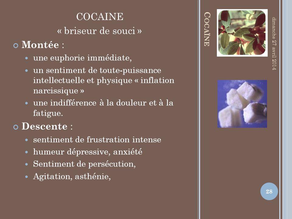 C OCAÏNE COCAINE « briseur de souci » Montée : une euphorie immédiate, un sentiment de toute-puissance intellectuelle et physique « inflation narcissi