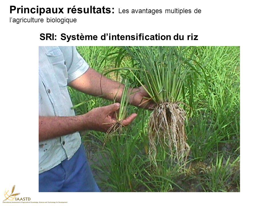 SRI: Système dintensification du riz Principaux résultats: Les avantages multiples de lagriculture biologique