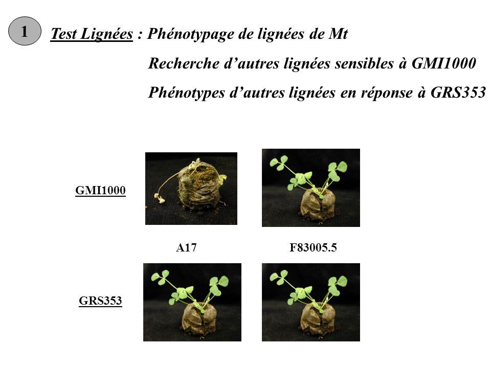 Test Lignées : Phénotypage de lignées de Mt Recherche dautres lignées sensibles à GMI1000 Phénotypes dautres lignées en réponse à GRS353 GMI1000 GRS353 A17F83005.5 1