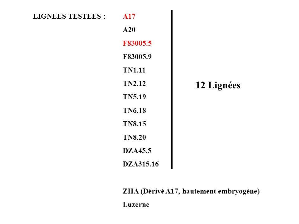 LIGNEES TESTEES : A17 A20 F83005.5 F83005.9 TN1.11 TN2.12 TN5.19 TN6.18 TN8.15 TN8.20 DZA45.5 DZA315.16 ZHA (Dérivé A17, hautement embryogène) Luzerne 12 Lignées