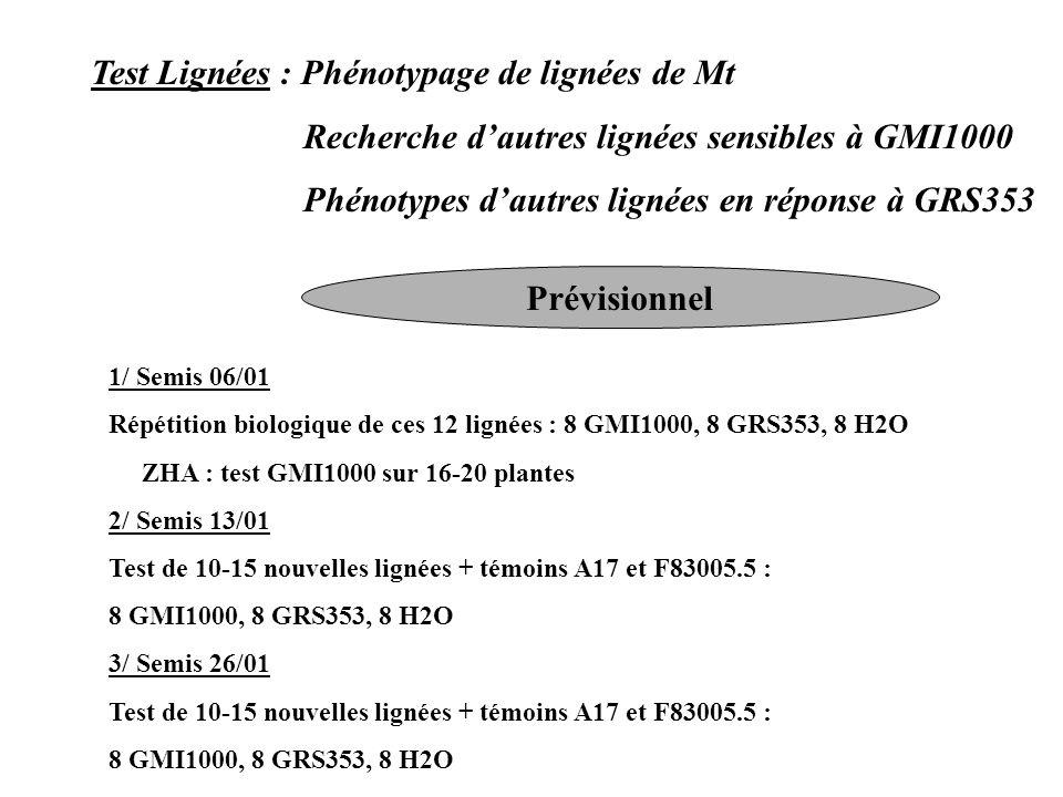 Test Lignées : Phénotypage de lignées de Mt Recherche dautres lignées sensibles à GMI1000 Phénotypes dautres lignées en réponse à GRS353 Prévisionnel 1/ Semis 06/01 Répétition biologique de ces 12 lignées : 8 GMI1000, 8 GRS353, 8 H2O ZHA : test GMI1000 sur 16-20 plantes 2/ Semis 13/01 Test de 10-15 nouvelles lignées + témoins A17 et F83005.5 : 8 GMI1000, 8 GRS353, 8 H2O 3/ Semis 26/01 Test de 10-15 nouvelles lignées + témoins A17 et F83005.5 : 8 GMI1000, 8 GRS353, 8 H2O