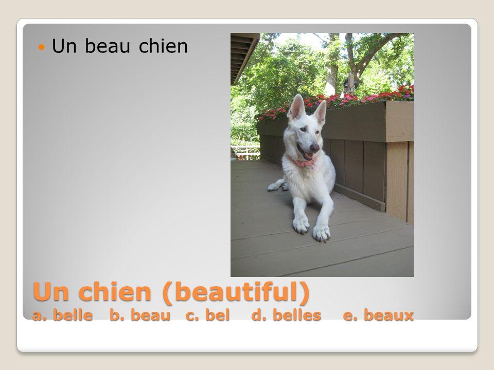 Un chien (beautiful) a. belle b. beau c. bel d. belles e. beaux Un beau chien