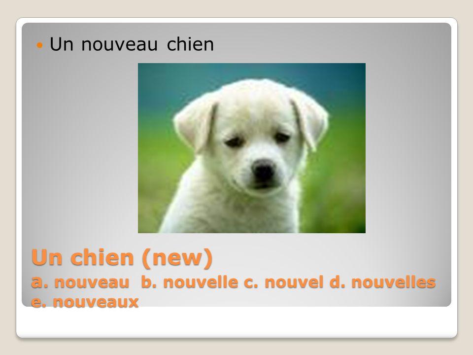 Un chien (new) a. nouveau b. nouvelle c. nouvel d. nouvelles e. nouveaux Un nouveau chien