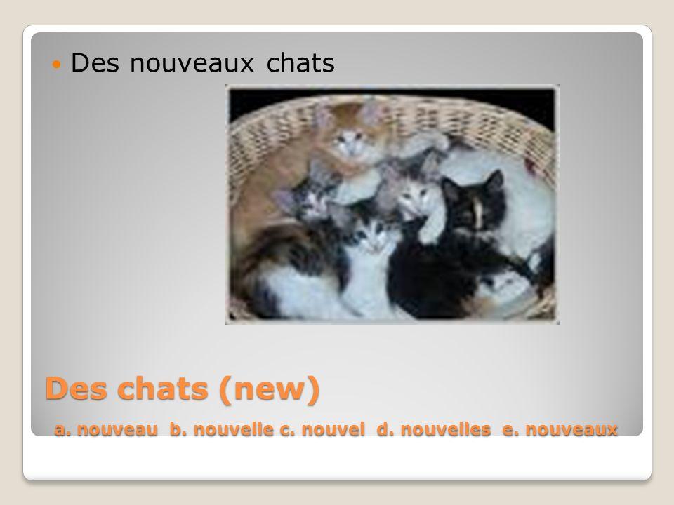 Des chats (new) a. nouveau b. nouvelle c. nouvel d. nouvelles e. nouveaux Des nouveaux chats