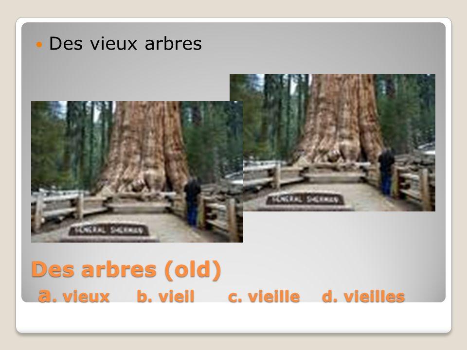 Des arbres (old) a. vieux b. vieil c. vieille d. vieilles Des vieux arbres