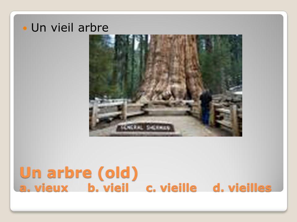 Un arbre (old) a. vieux b. vieil c. vieille d. vieilles Un vieil arbre