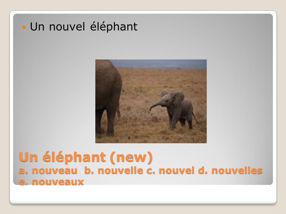 Un éléphant (new) a. nouveau b. nouvelle c. nouvel d. nouvelles e. nouveaux Un nouvel éléphant