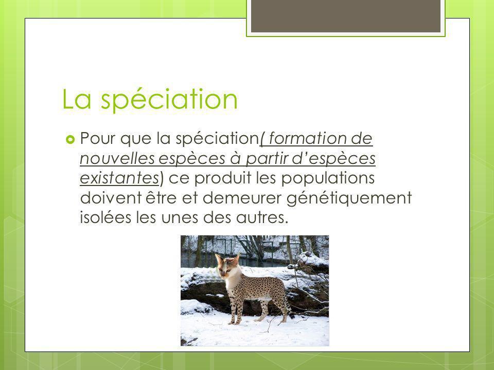La spéciation Pour que la spéciation( formation de nouvelles espèces à partir despèces existantes) ce produit les populations doivent être et demeurer