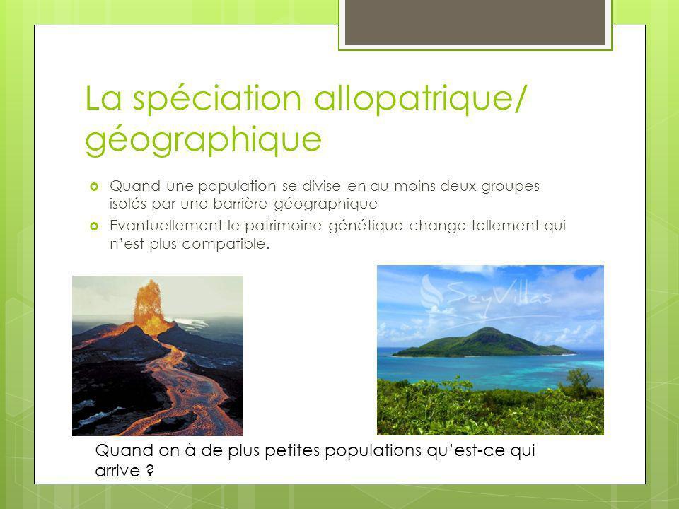 La spéciation allopatrique/ géographique Quand une population se divise en au moins deux groupes isolés par une barrière géographique Evantuellement l