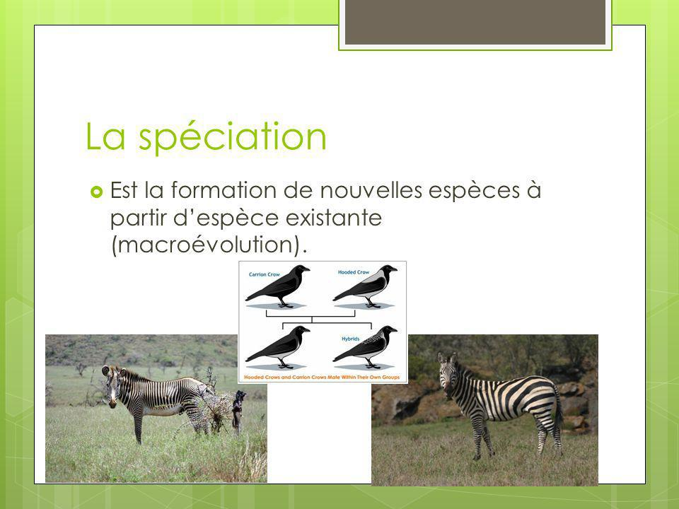 La spéciation Est la formation de nouvelles espèces à partir despèce existante (macroévolution).