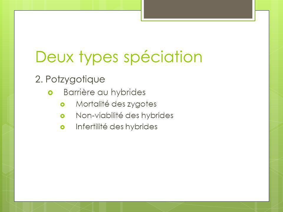 Deux types spéciation 2. Potzygotique Barrière au hybrides Mortalité des zygotes Non-viabilité des hybrides Infertilité des hybrides
